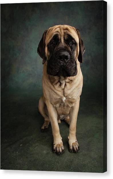 Mastiffs Canvas Print - Portrait Of A Mastiff by Animal Images