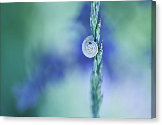 Spiral Canvas Print - Snail On Grass by Nailia Schwarz