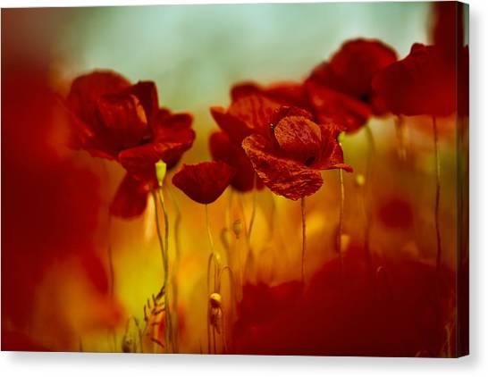 Corn Field Canvas Print - Summer Poppy by Nailia Schwarz