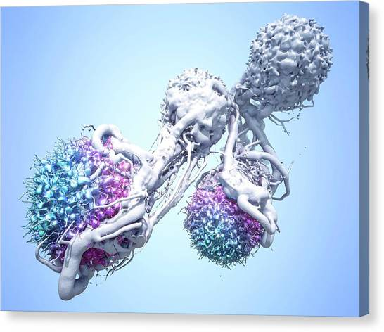 T Cells Attacking Cancer Cells Canvas Print by Maurizio De Angelis