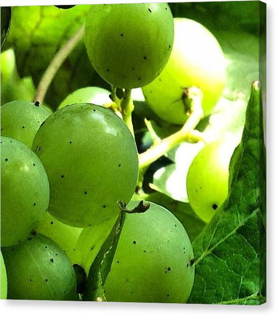 Grapes Canvas Print - This Photo Is One Of A Series Created by Baz Twyman