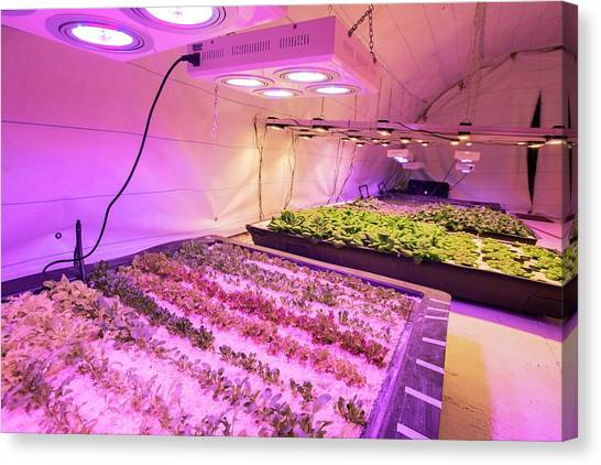 Salad Canvas Print - Underground Horticulture by Louise Murray