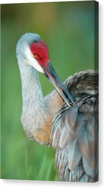Crane  Bird Canvas Prints (Page #10 of 100) | Fine Art America