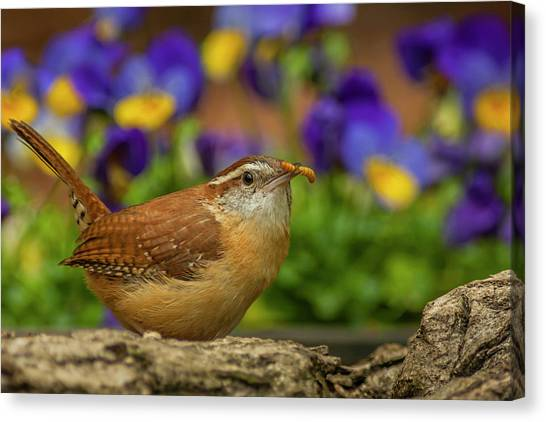Wrens Canvas Print - Usa, North Carolina, Guilford County by Jaynes Gallery