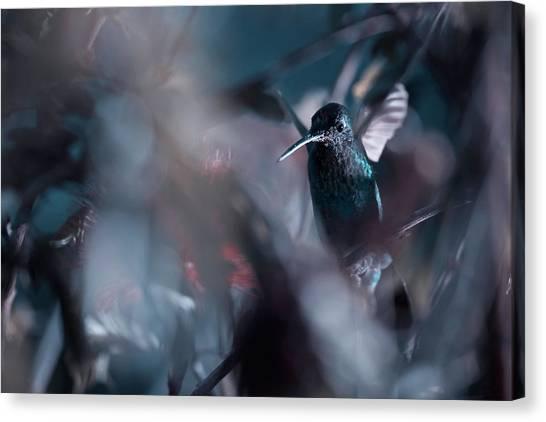 Small Birds Canvas Print - 50 Hz by Fabien Bravin