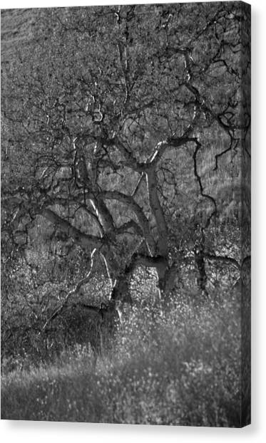 50 Shades Of Gray Trees Canvas Print