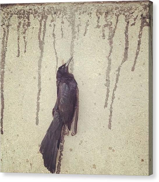 Ravens Canvas Print - Instagram Photo by Gustavo Alonso