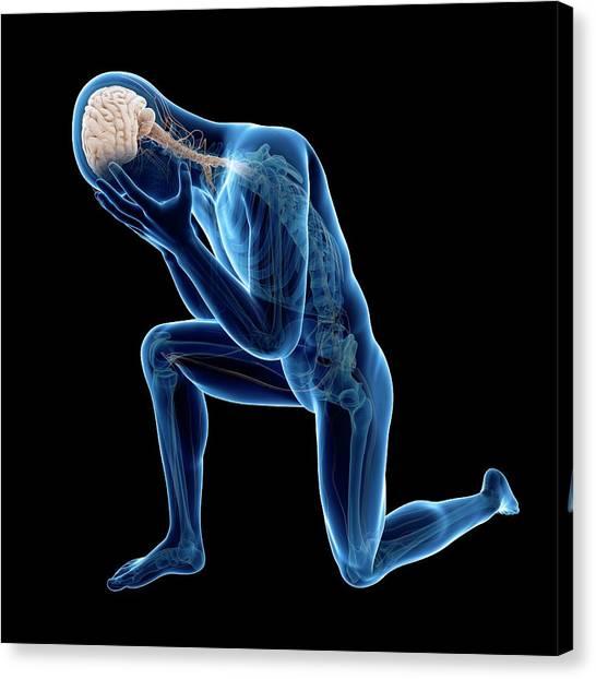 Human Nervous System Canvas Print by Sebastian Kaulitzki