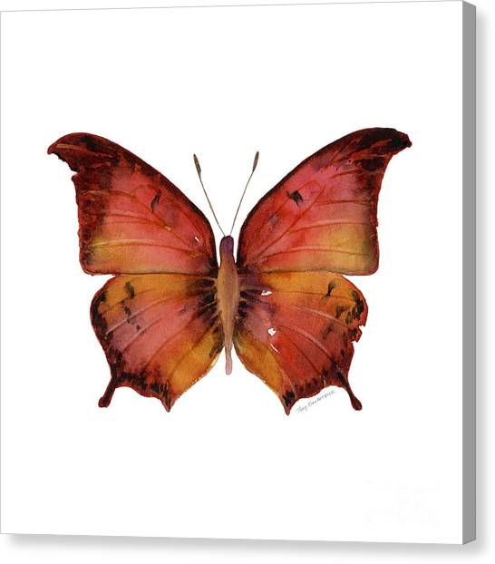 Moth Canvas Print - 58 Andria Butterfly by Amy Kirkpatrick