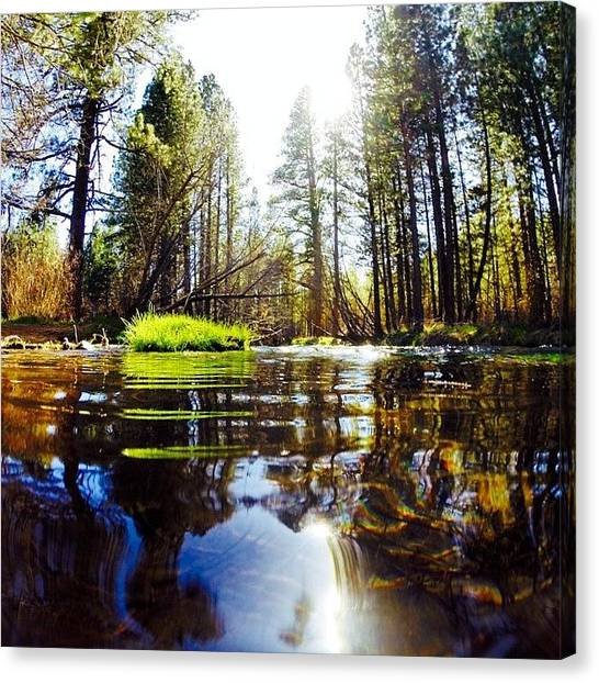 Redwood Forest Canvas Print - Northern California Forest by Michael Gilan