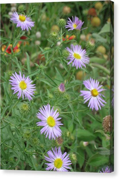 6 Asters Left Canvas Print