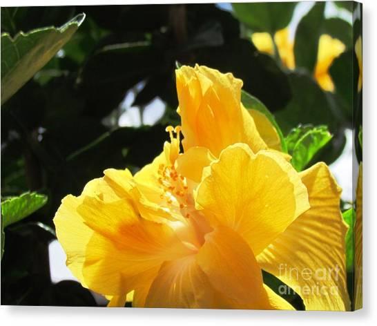 Boquete Flower Canvas Print