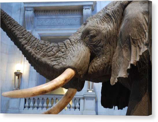 Bull Elephant In Natural History Rotunda Canvas Print