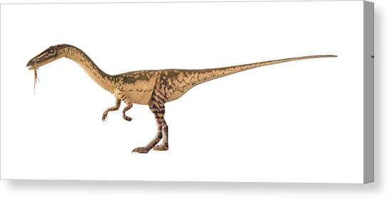 Coelophysis Dinosaur Model Canvas Print by Natural History Museum, London/science Photo Library
