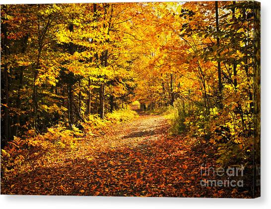 Orange Tree Canvas Print - Fall Forest by Elena Elisseeva