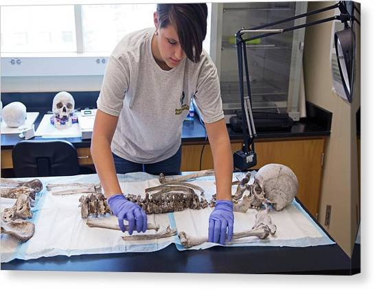 Baylor University Canvas Print - Forensic Scientist Identifying Remains by Jim West