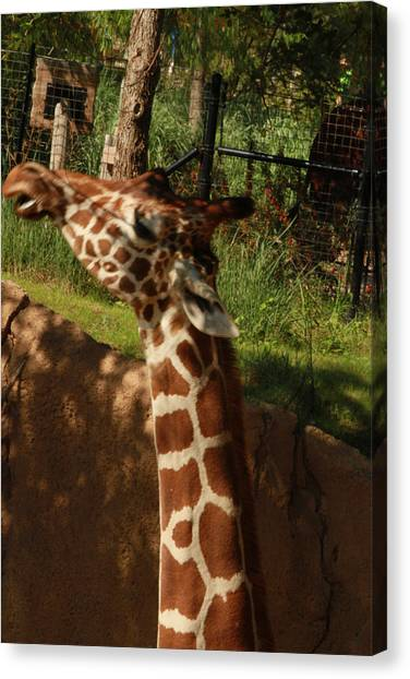 Giraff Canvas Print by Tinjoe Mbugus