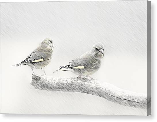 Search Canvas Print - Greenfinch  by Heike Hultsch