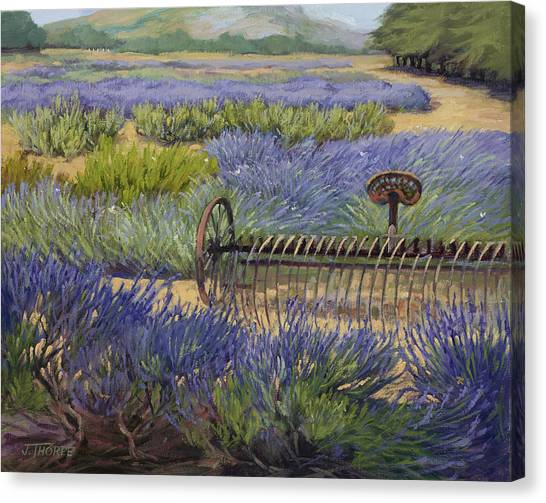 Edge Of The Lavender Field Canvas Print