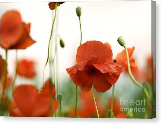 Summertime Canvas Print - Red Poppy Flowers by Nailia Schwarz