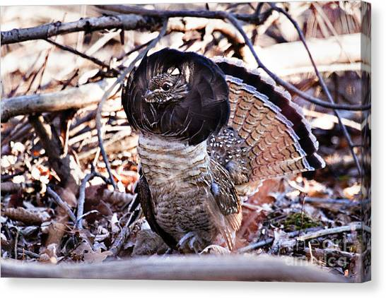 Ruffed Grouse Canvas Print