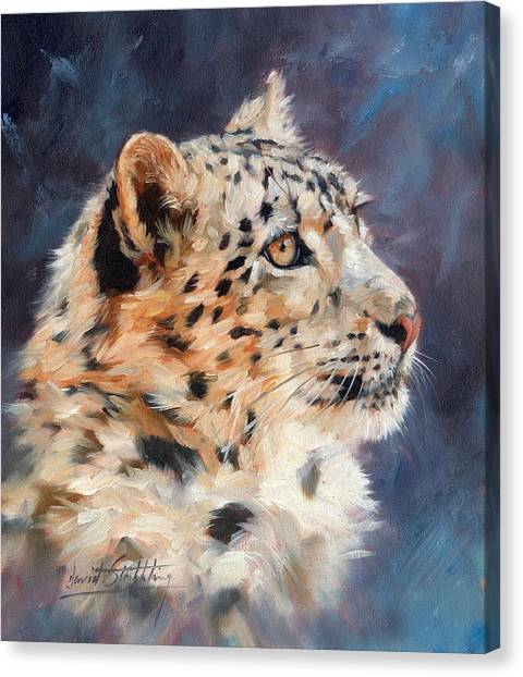 Himalayas Canvas Print - Snow Leopard by David Stribbling