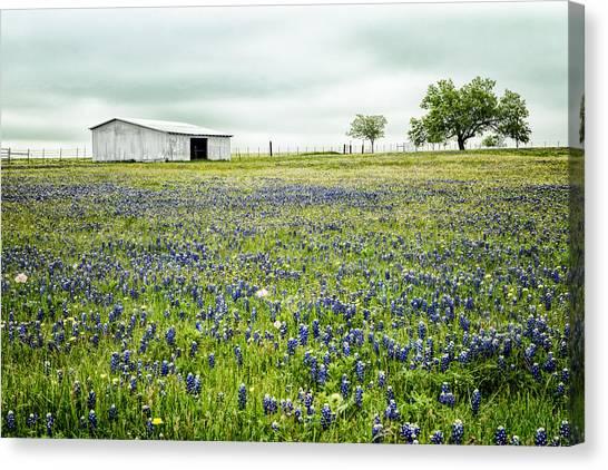 Texas Bluebonnets 6 Canvas Print