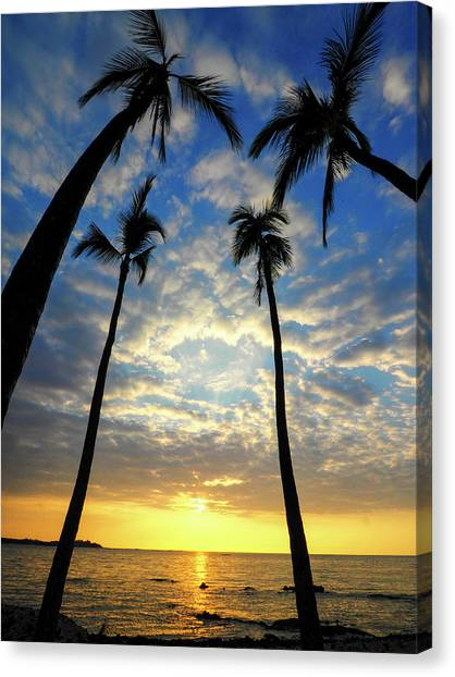 Palm Trees Sunsets Canvas Print - Usa, Hawaii, Big Island by Julie Eggers