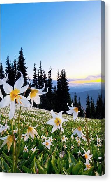 Usa, Washington State, Olympic National Canvas Print by Gary Luhm