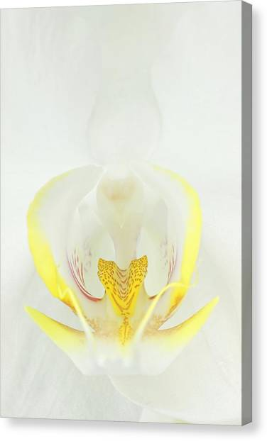 White Orchid-3 Canvas Print