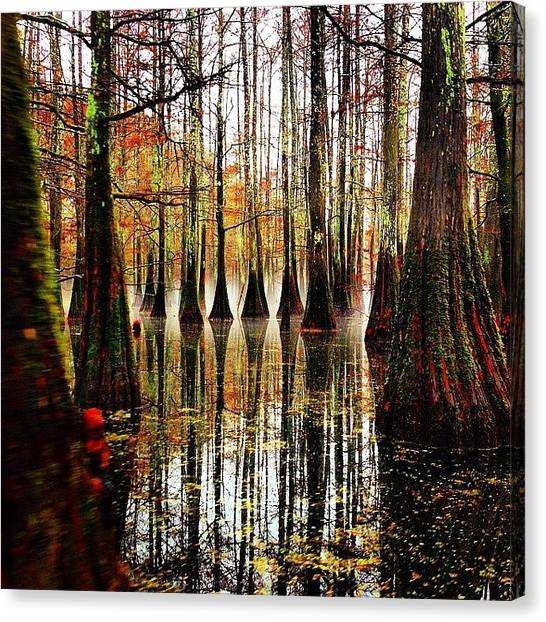 Swamps Canvas Print - Cypress Mist by Jesse Hinton