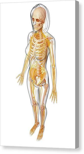 Skeleton Woman Canvas Prints Page 14 Of 51 Fine Art America