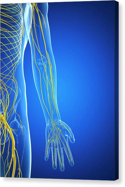Nervous System Canvas Print by Sciepro/science Photo Library