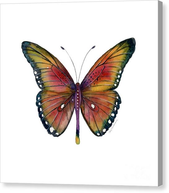66 Spotted Wing Butterfly Canvas Print