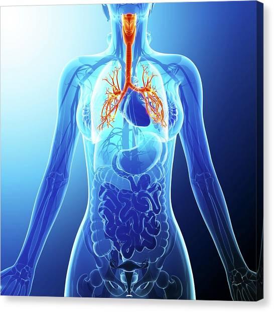 Human Cardiovascular System Canvas Print by Pixologicstudio