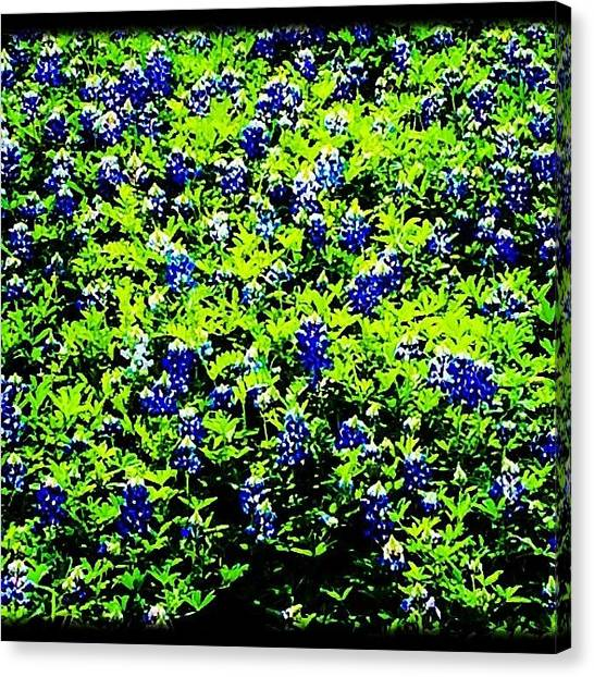 Texas A Canvas Print - Instagram Photo by Paige Edwards