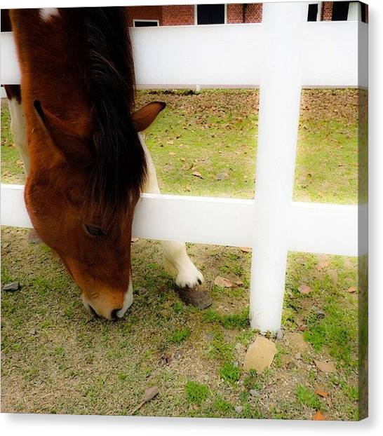 Horse Farms Canvas Print - Instagram Photo by Yasuyo Ikenaga