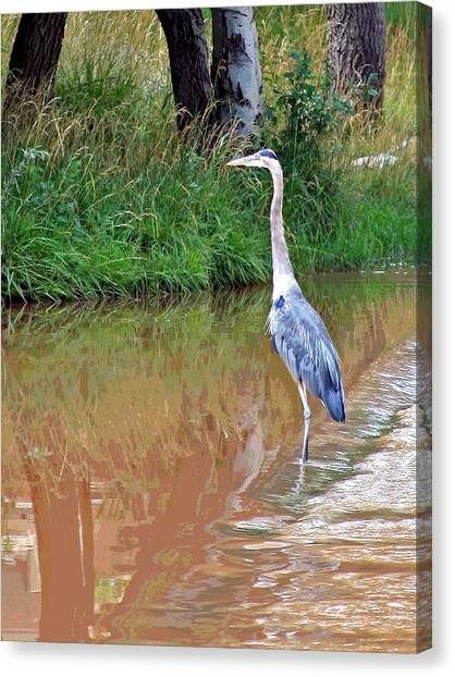 Blue Heron On The East Verde River Canvas Print