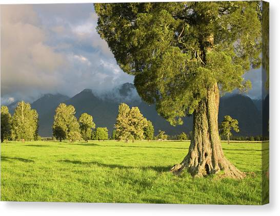 Fox Glacier Canvas Print - South Pacific, New Zealand, South Island by Jaynes Gallery