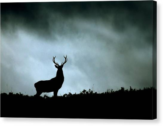 Stag Silhouette Canvas Print