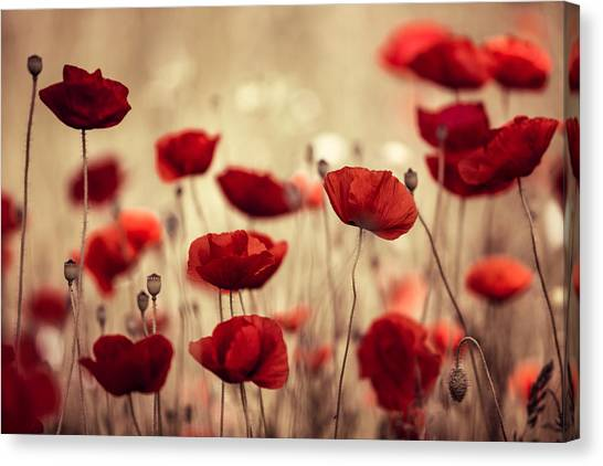 Poppies Canvas Print - Summer Poppy by Nailia Schwarz