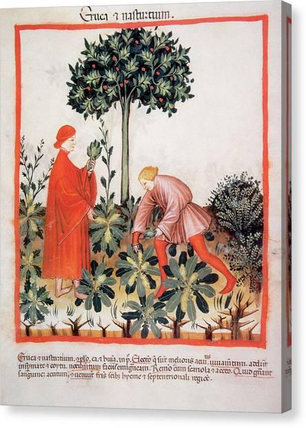 Watercress Canvas Print - Tacuinum Sanitatis, Medieval Health by Prisma Archivo