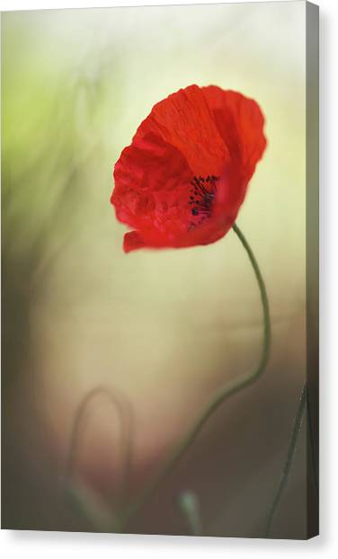 Untitled Canvas Print by Keren Or
