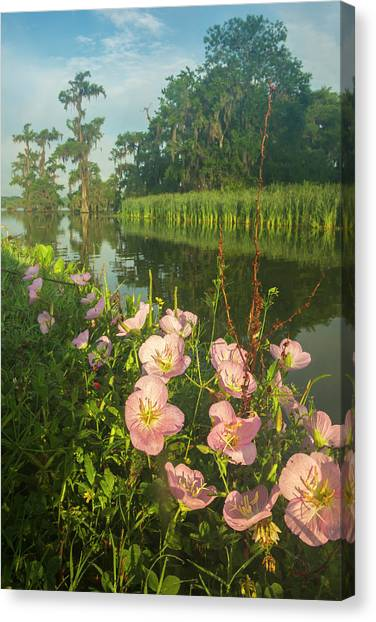 Bayous Canvas Print - Usa, Louisiana, Lake Martin by Jaynes Gallery
