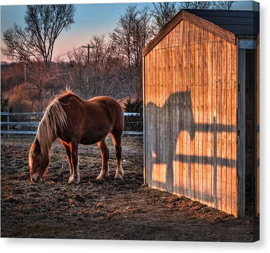 7056 Horse Shadow Canvas Print by Deidre Elzer-Lento