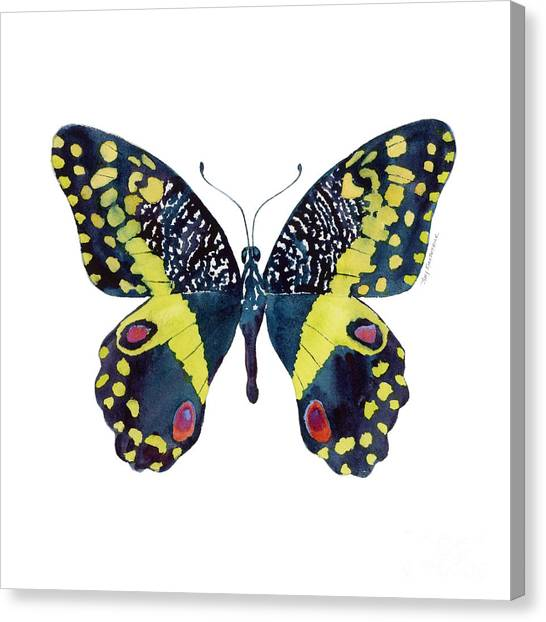73 Citrus Butterfly Canvas Print