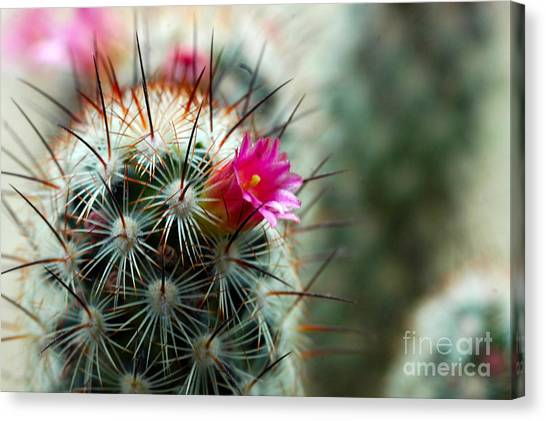 734a Tubular Cactus Flower Canvas Print