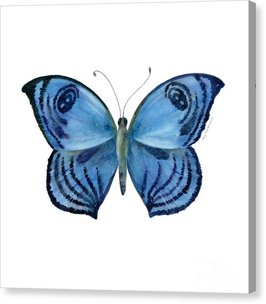 Moth Canvas Print - 75 Capanea Butterfly by Amy Kirkpatrick
