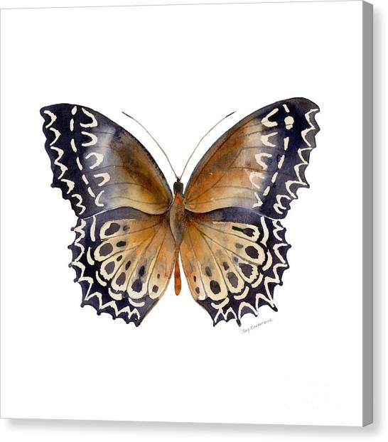77 Cethosia Butterfly Canvas Print