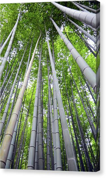 Sagano Bamboo Forest Canvas Print - Arashiyama Bamboo Path by Nano Calvo